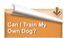 Can I Train My Own Dog?